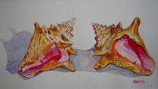 Briland-Conchs---Watercolor-(10x14)