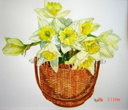 Nantucket-Daffodils---Watercolor-(12x12)