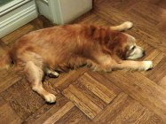 This is how the dogs feel. I ran into a golden who had been shaved. He was cool but weird looking.