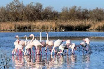 Pink everything, including flamingos.