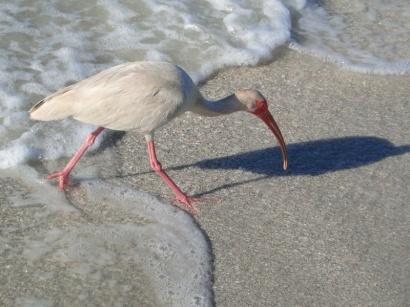 five-Florida-Island-Escapes-credit-Lauren-Tjaden (6)