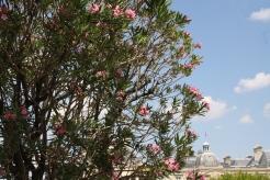 I love oleander. So surprised to see it in Paris.