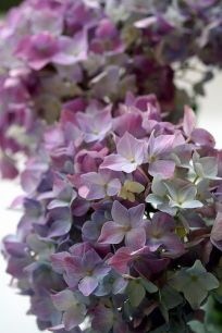 Even the hydrangeas know it's time to go.